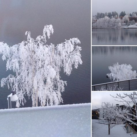 Winter Holiday Shots