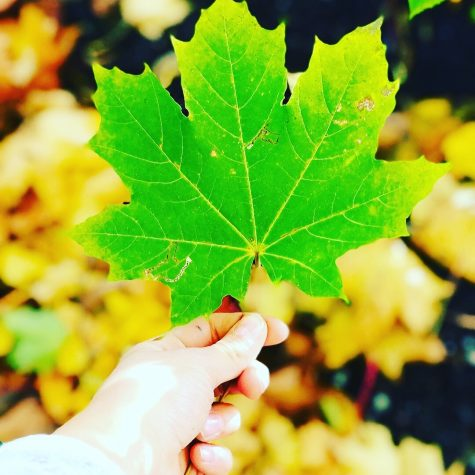 Green leaf, photo competition 20