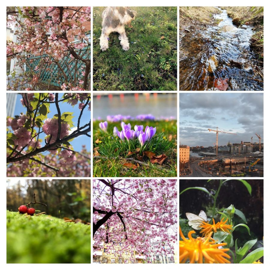 Signs of Spring Finalists!